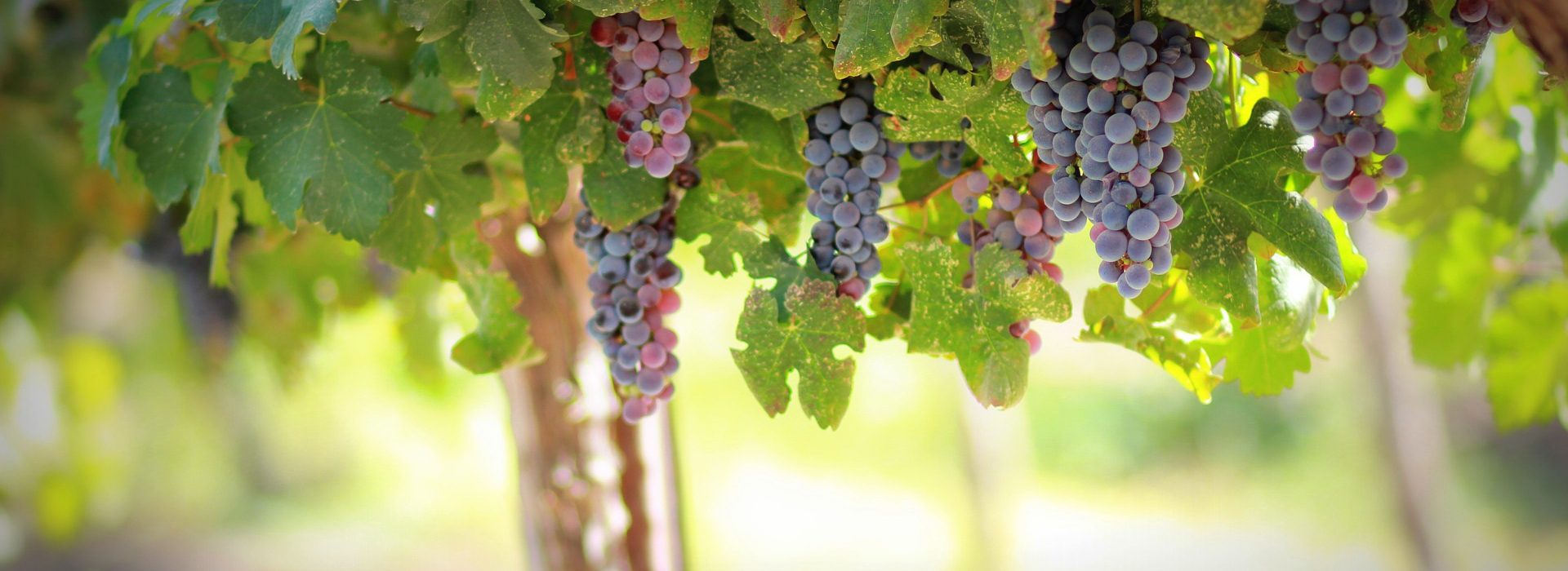 Abide in me, and I in you. As the branch cannot bear fruit of itself, except it abide in the vine; no more can ye, except ye abide in me.