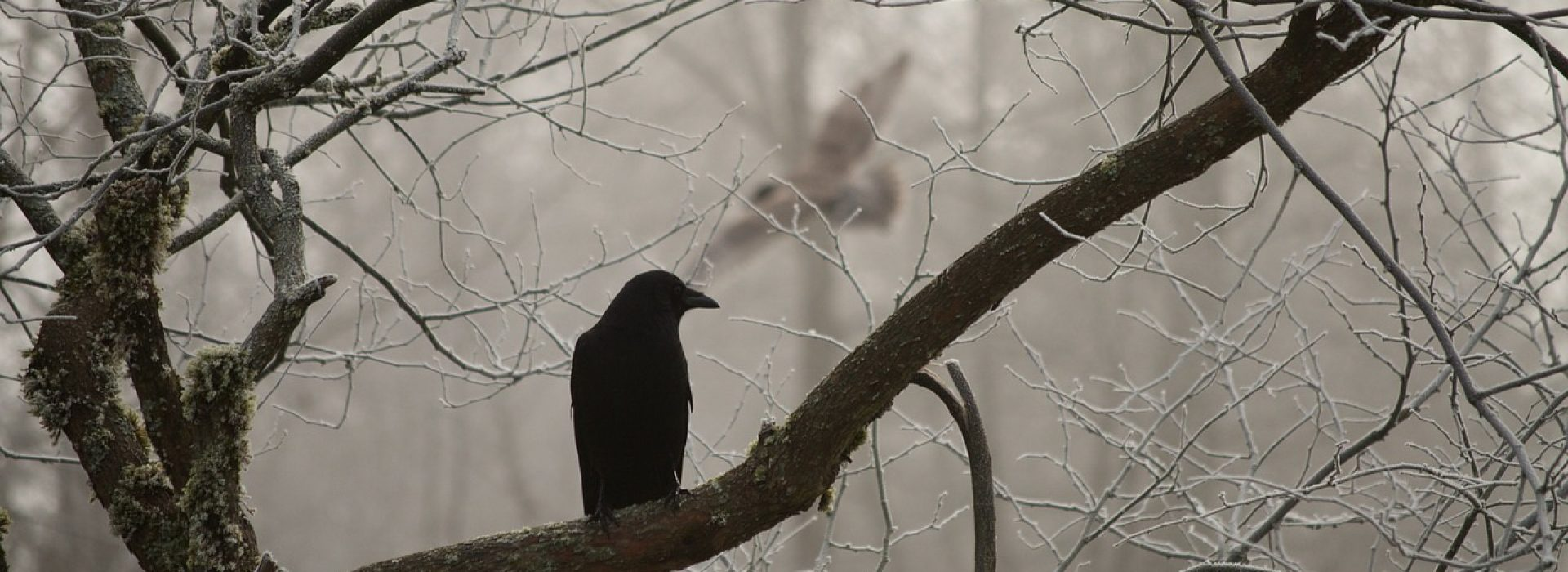 Consider the ravens: for they neither sow nor reap