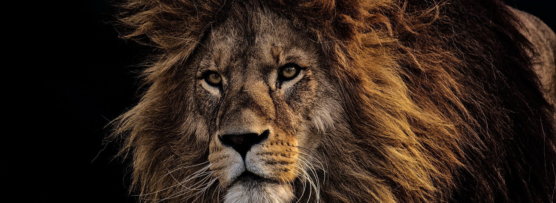 The lion did tear in pieces enough for his whelps, and strangled for his lionesses, and filled his holes with prey, and his dens with ravin.